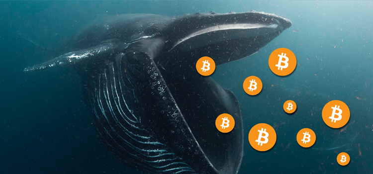 Bitcoin Whale Transfers $1 Billion In BTC For A Mere $700 Fee